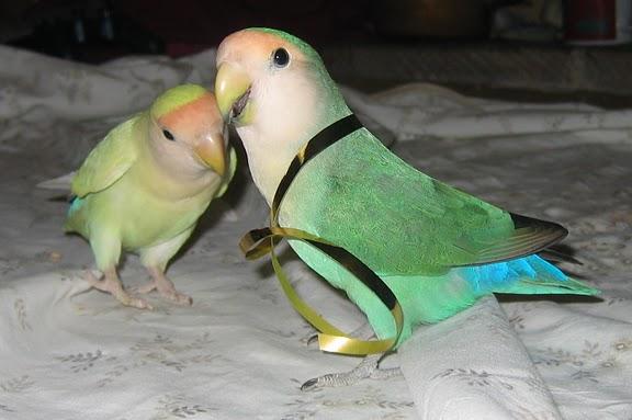 xmas_birdie